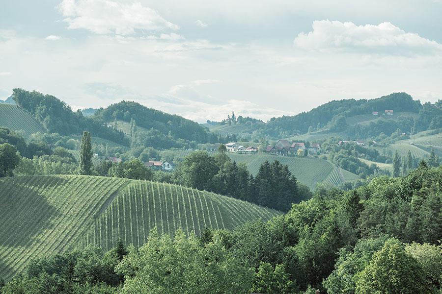 Urlaub mit Blick auf die Weingärten
