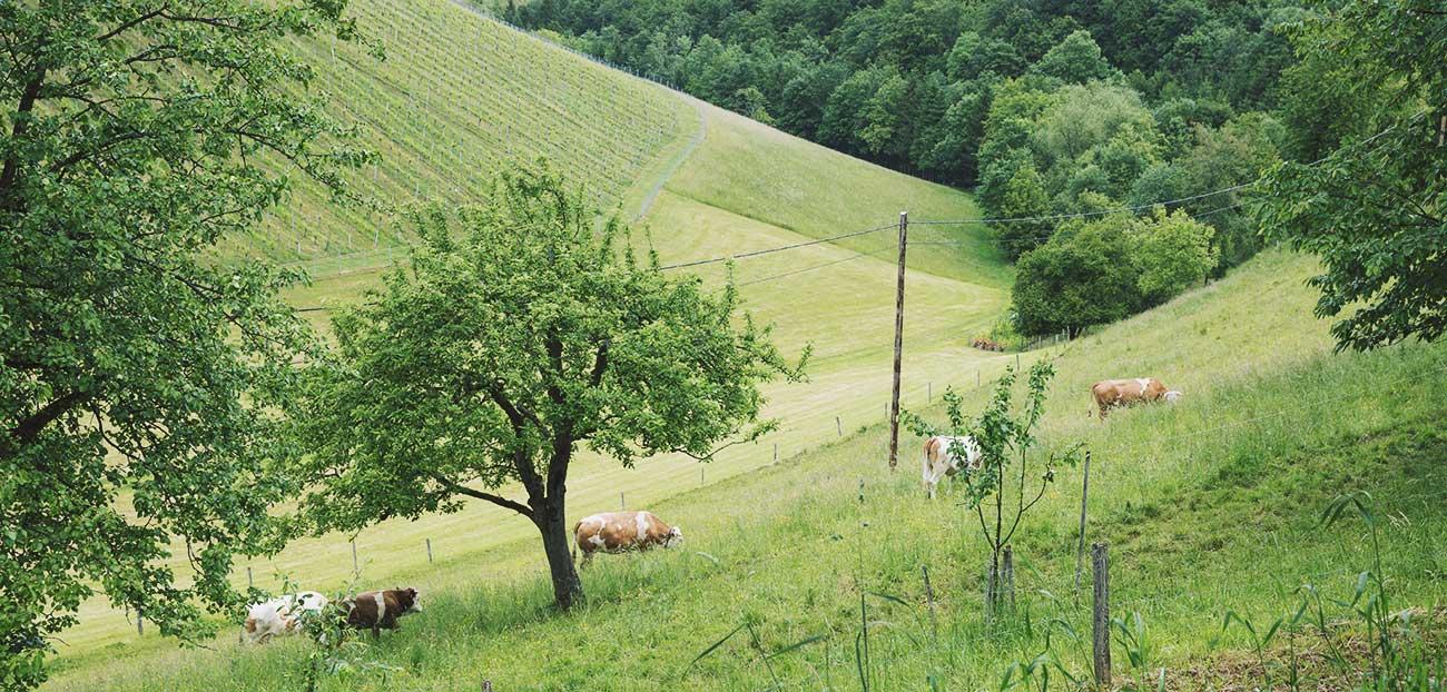 Echtes steirisches Lebensgefühl in Pößnitz